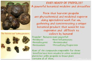 Propolis: Natures Most Potent Antioxidant