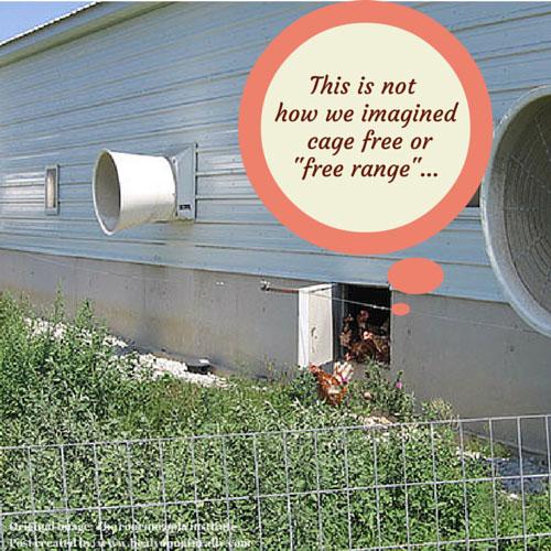 Organic-eggs-and-milk-factories