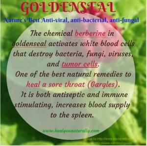 health benefits of goldenseal