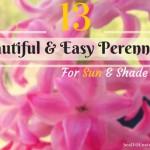 13-Easy-Perennials-for-sun-
