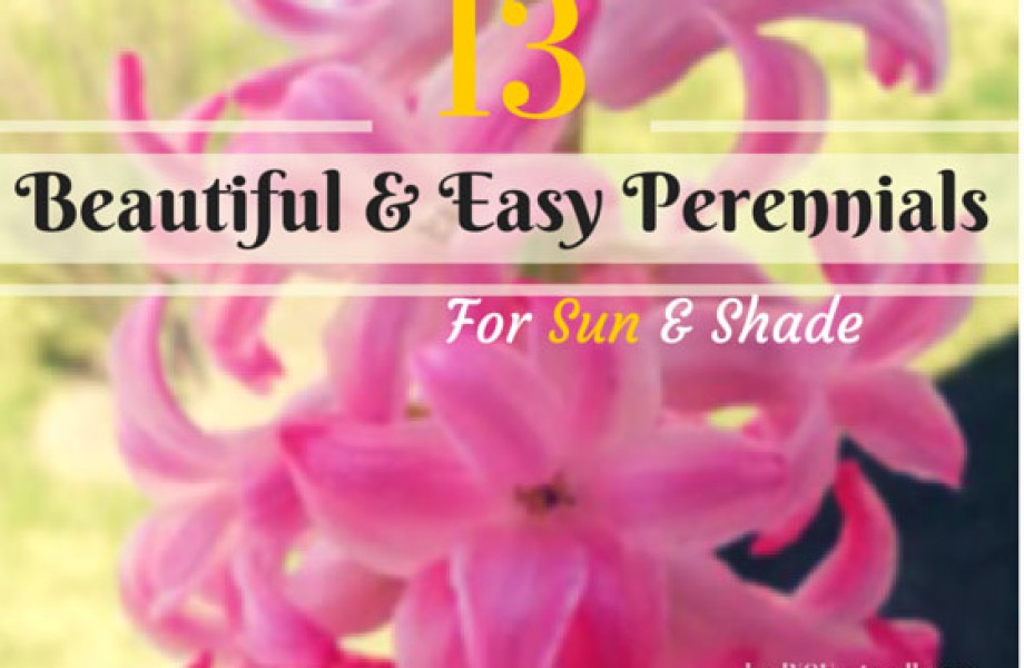 13 Beautiful and Easy Perennials for Sun and Shade