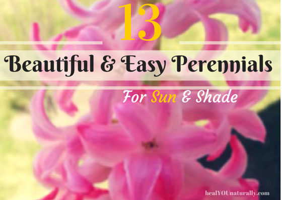 13 beautiful and easy to maintain perennials for both for Low maintenance perennials for full sun