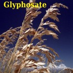 companies-to-ban-glyphocate-T