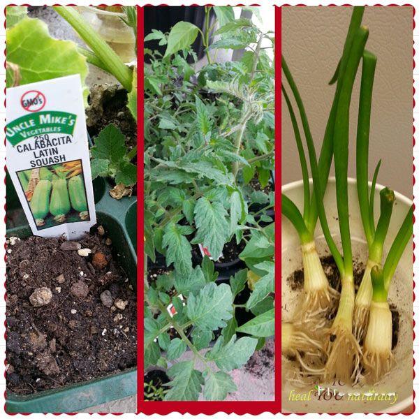 before-planting-seedlings-n-compressor