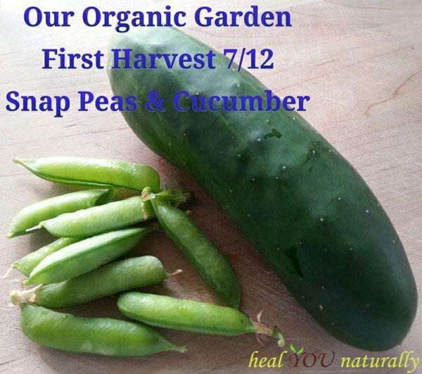 first-harvest-organic-garde