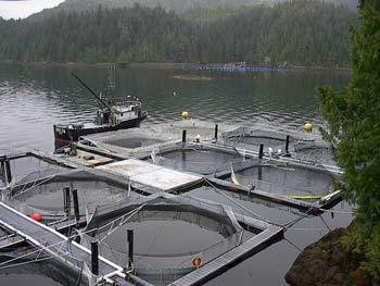 farmed fish dangers