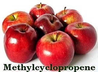 meethylcyclopropene chemical in appless